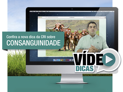 video-dicas-set